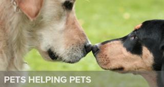 Pets-Teaser